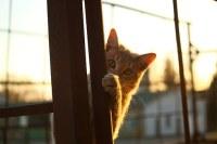 cat-1040815__340