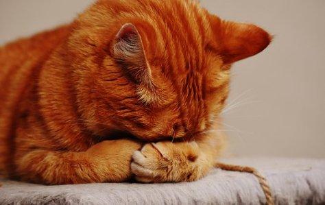 cat-1675422__340